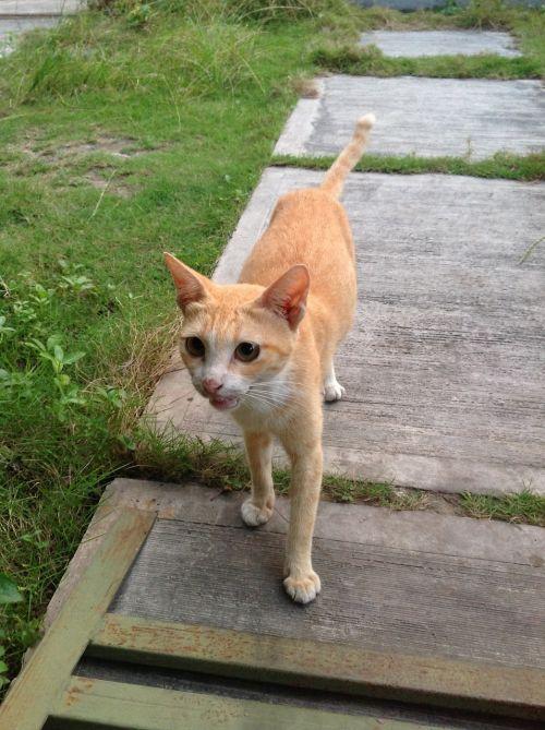 cat animal mammal
