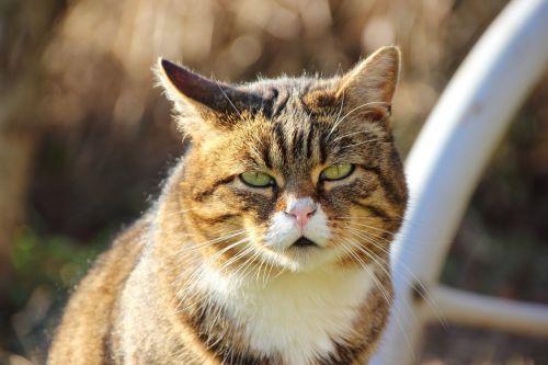cat,portrait,close,animal,expression,cat face,face,back light