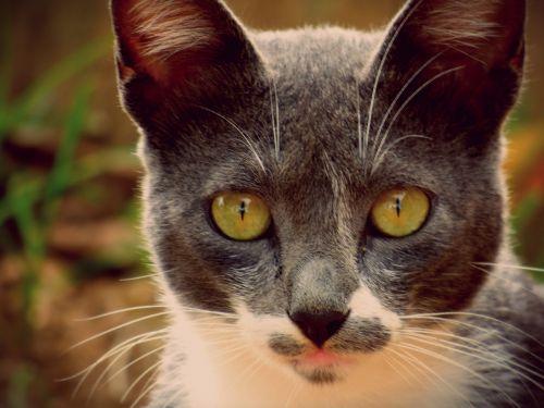 cat cats animal