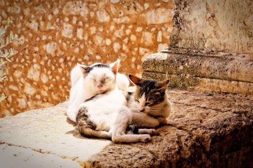 cat kitten pair