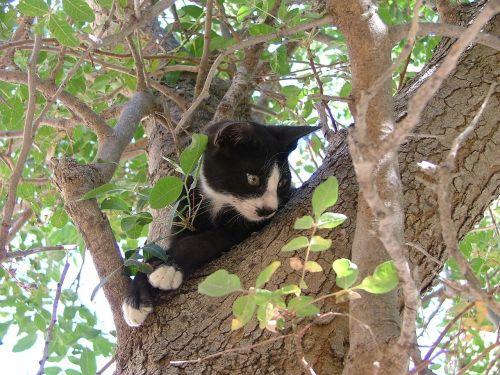 cat tree black