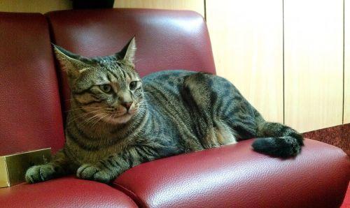 cat lay sat pet