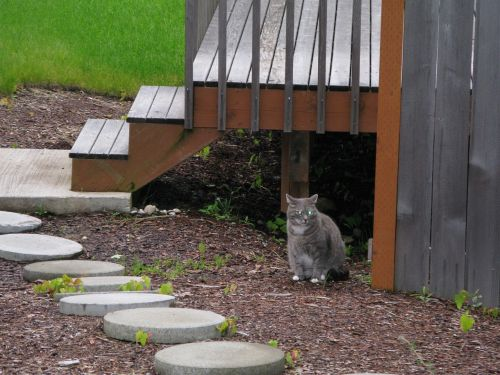 cat outside outdoors