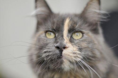 cat animal cat's eyes