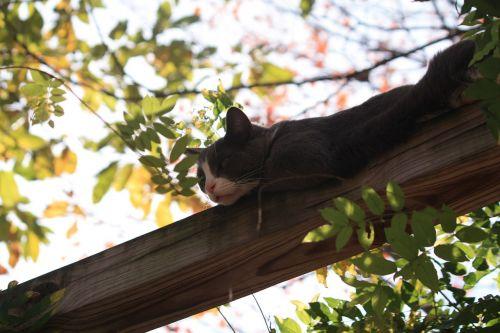 katė,arboreal,žavinga,nėra žmonių,vienas gyvūnas,miega