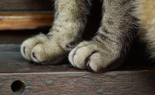 cat legs claws
