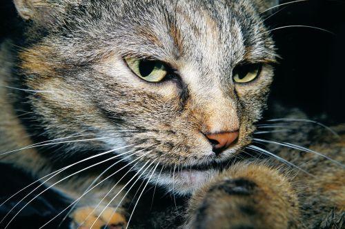 cat head cat face