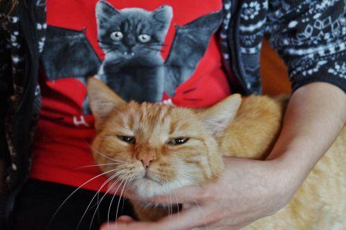 cat drbe caressing