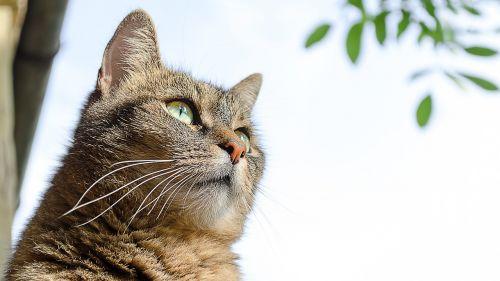 katė,gyvūnai,naminis katinas,kūdikiai,naminis gyvūnėlis,kačiukas,žiūrėti