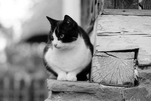 cat ledge pet