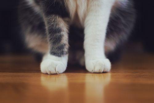 cat pet animal