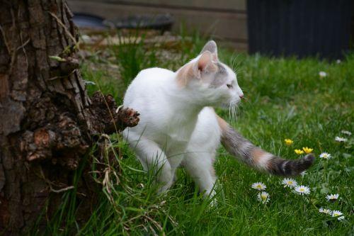 cat grass lookout
