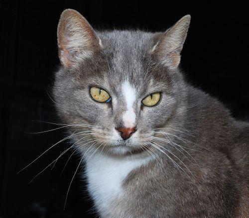 cat female soft