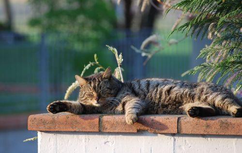 cat snoozing flat sole