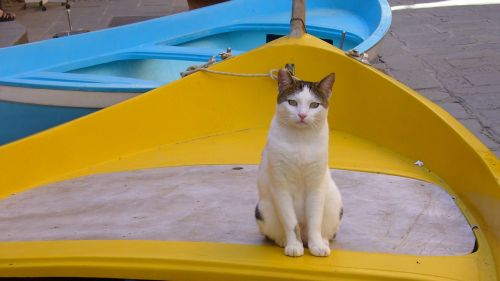 cat barca yellow