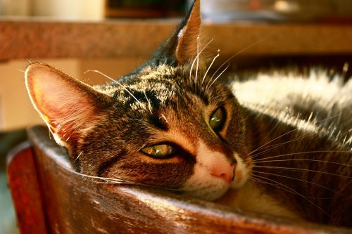 cat cozy concerns