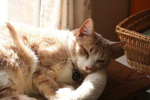 cat light shadow