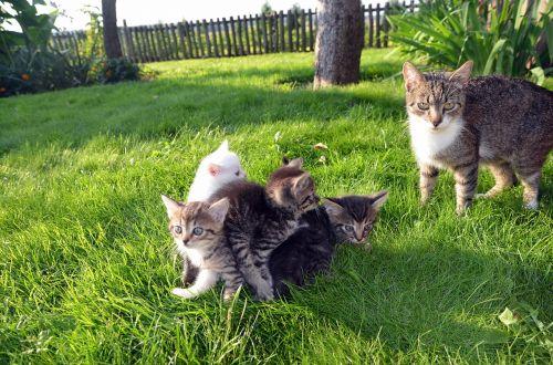 cat family pet