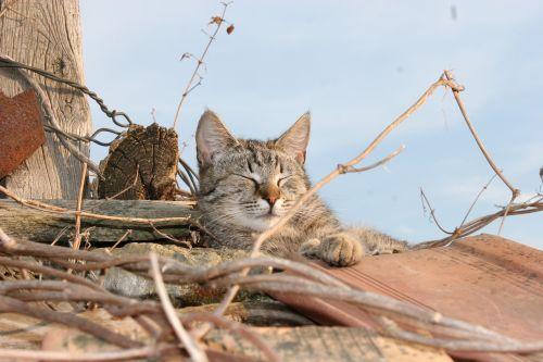 cat roof shingle