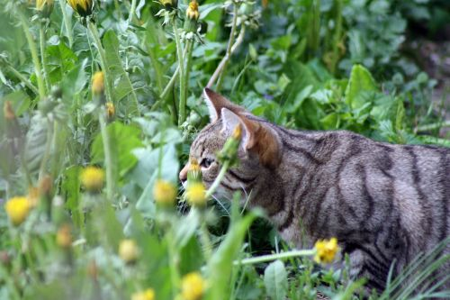 cat taste spring