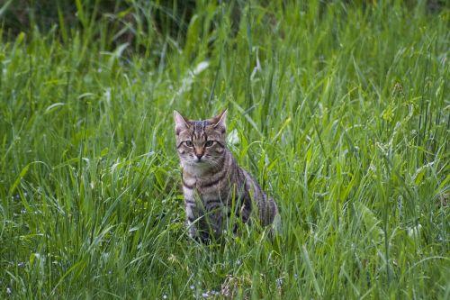 cat meadow spring