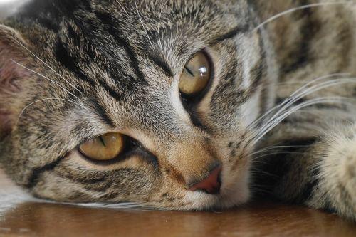 cat pet fur