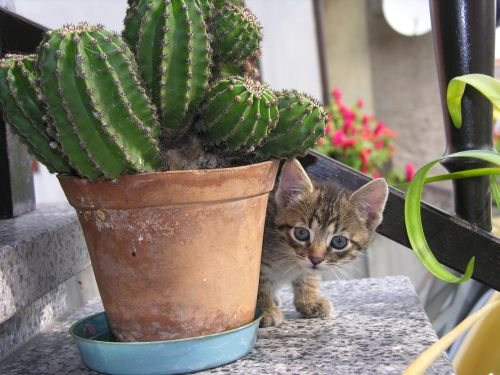 cat cactus bought my kittens