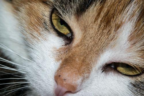 cat eye cat's eye