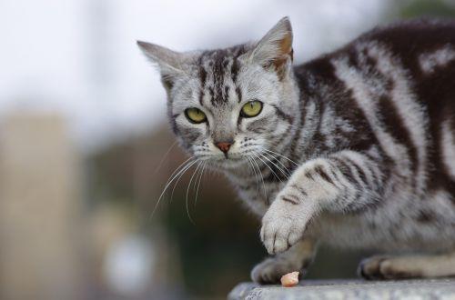 cat walk animal portraits