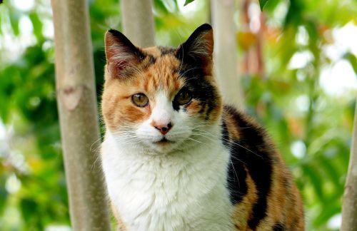 cat animal feline