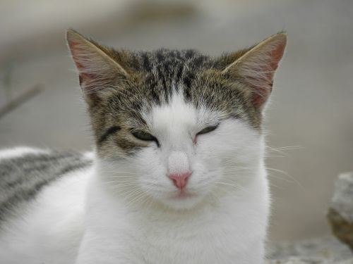 cat wink feline