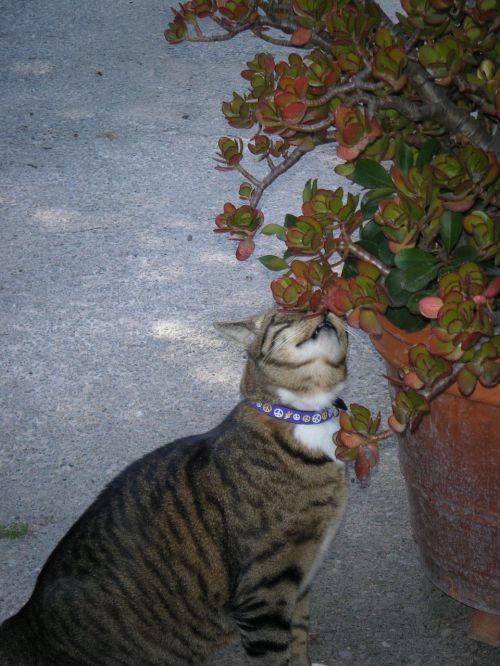 cat tabby lavender
