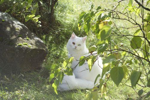 cat domestic cat sweet