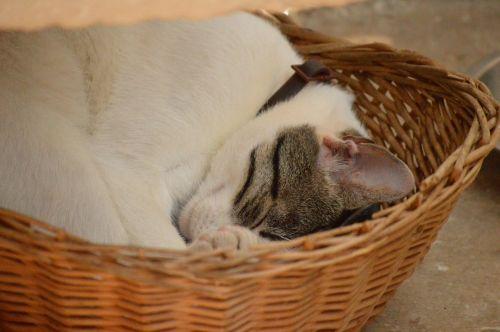 cat sleep peaceful