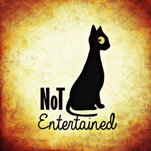 katė,nuobodulys,naminis katinas,mieze,mielas,nuobodžiaujantis,gyvūnas,juokinga
