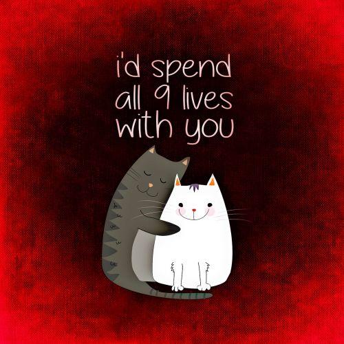 cat love together