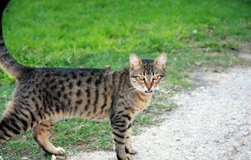 cat pet kitten