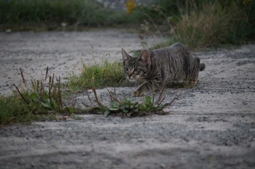 cat sneak up on hunting