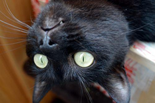 cat foolish delighting