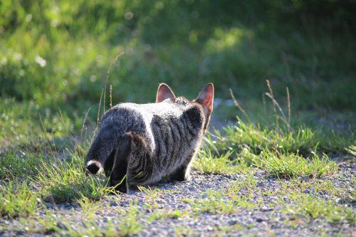 cat kitten sneak up on