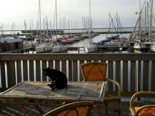 cat marina vacation