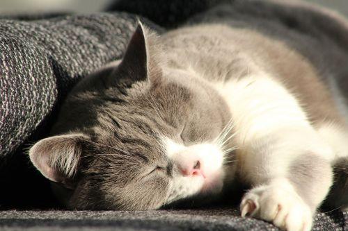 katė,mieze