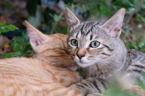 cat kitten baby cats