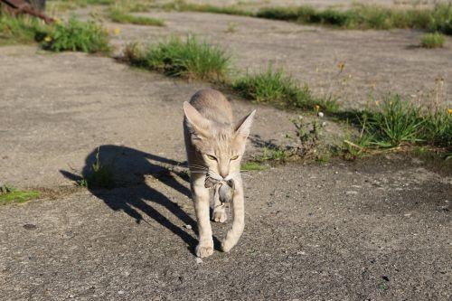 cat hunt pinch