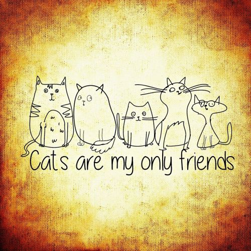 cat friends funny