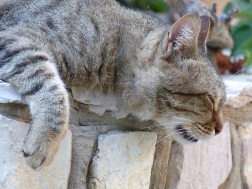 cat animal portrait of cat