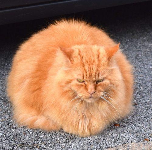 cat purr enjoy