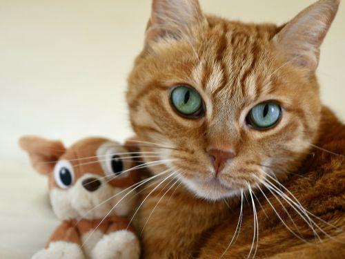 cat small cat cat's eye