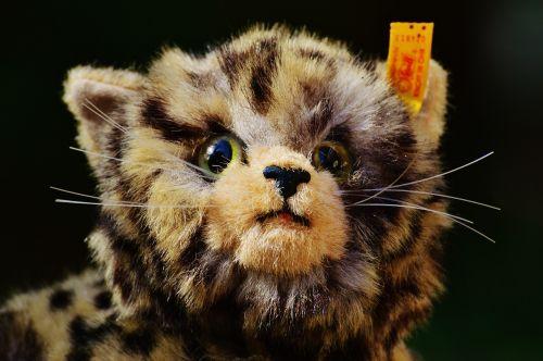 cat stuffed animal cute