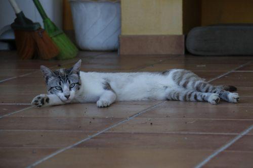 cat laziness rest